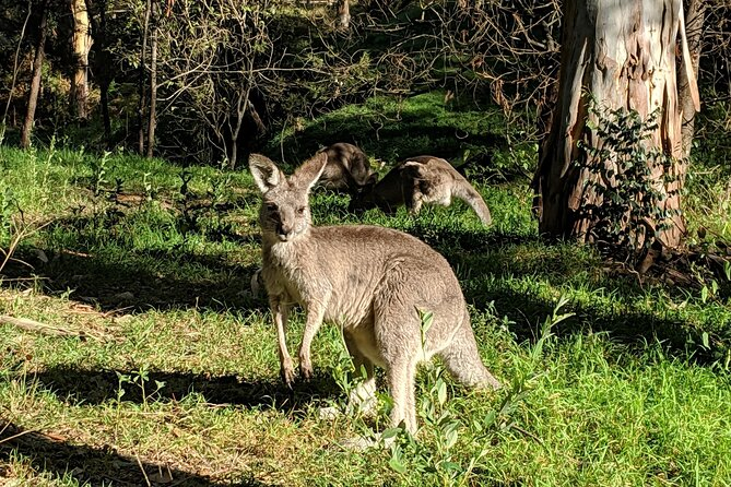 Australian Wildlife & Waterfalls Private Tour with 'Personalised Sydney Tours'