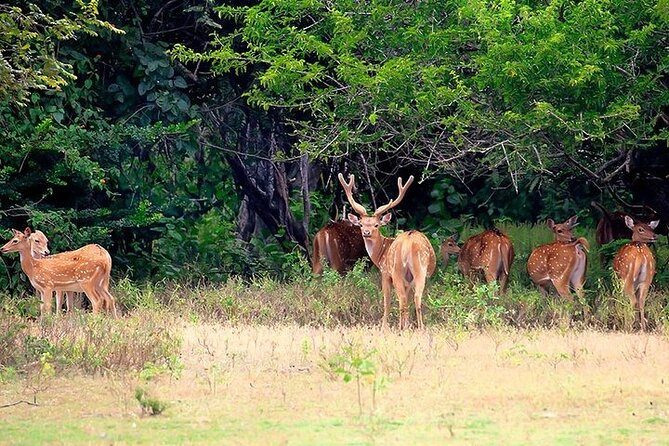 Kumana National Park Private Safari