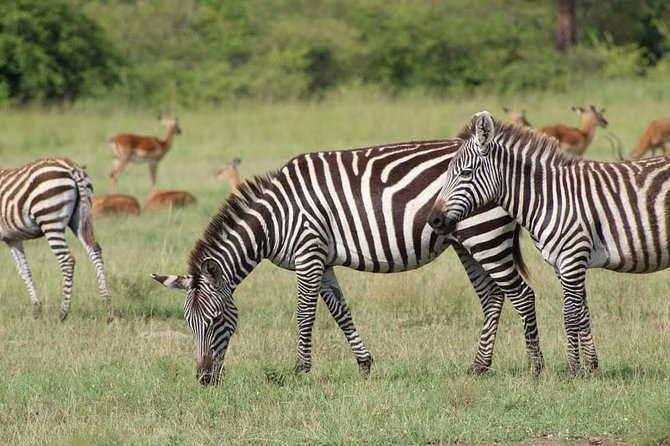 Private Full-Day Tour in Akagera National Park