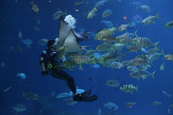 Istanbul Aquarium,Wednesday Bazaar & 212 Mall ~ Solo;Group
