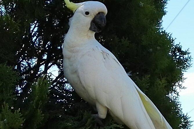 Sydney Parrots, a Unique Island and more
