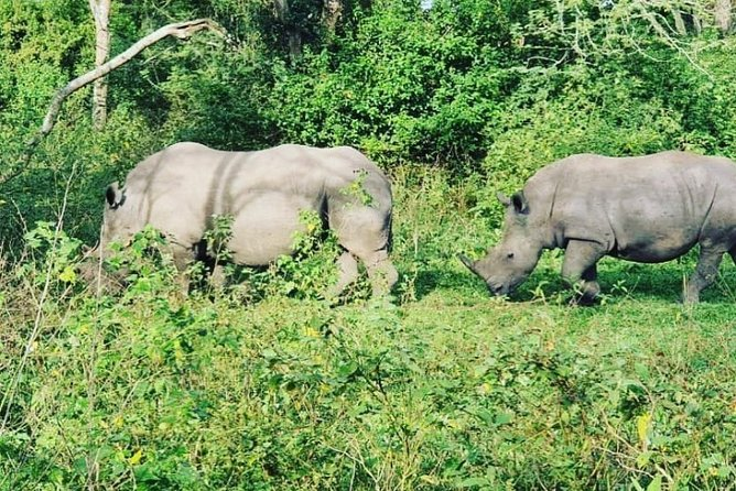 3 Days Rhino tracking and Murchison falls National Park Safari