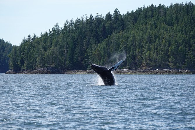 6 hour Covered Boat Whale Watching Tour