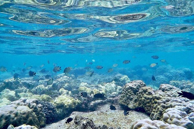 Phu Quoc Snorkeling and fishing to the North full day tour