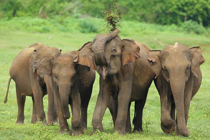 Udawalawe National Park Safari from Hambantota Port