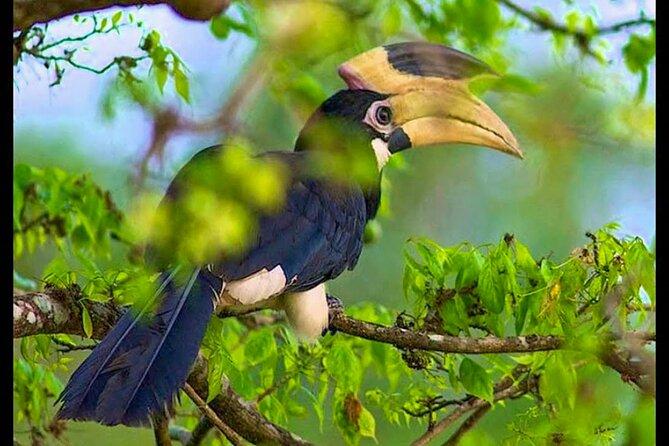 Bundala National Park Safari from Beruwala