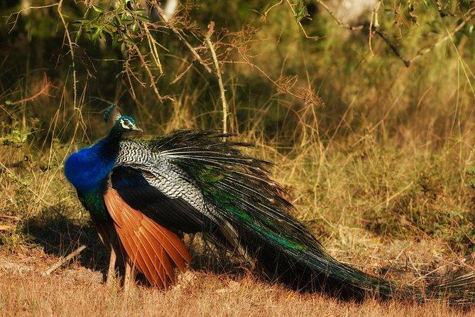 Bundala National Park Safari from Ahungalla