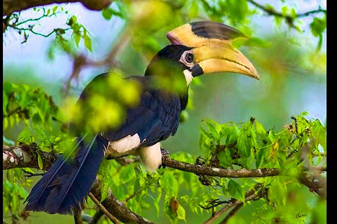 Bundala National Park Safari from Dikwella