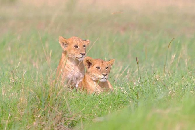 4 Days Serengeti and Ngorongoro private Safari