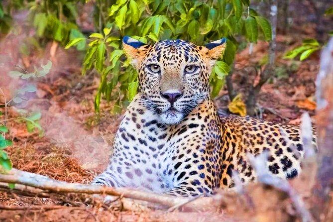 Yala National Park Safari from Ahungalla