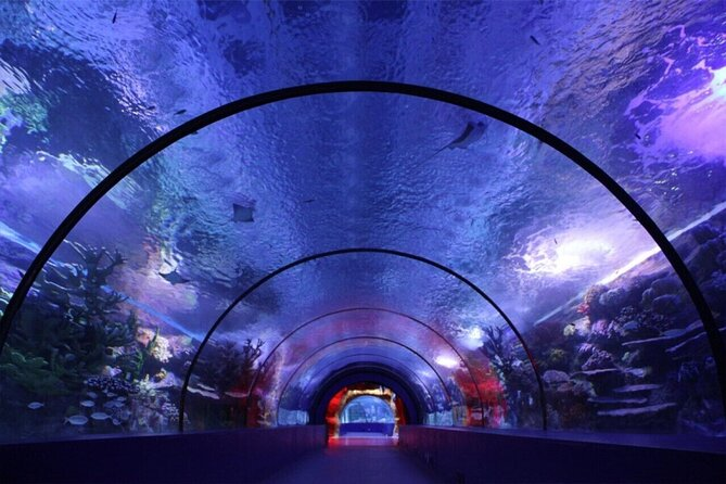 Antalya's Aquarium guided day tour with lunch;Solo;Group
