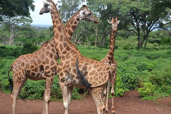 Day Tour: Giraffe Center and David Sheldrick Elephant Orphanage from Nairobi