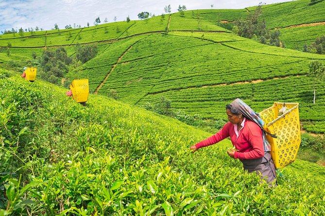 Nuwara Eliya Day Tour from Kandy