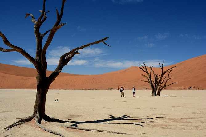 9 Day Etosha, Skeleton Coast and Sossusvlei Camping and Lodge Safari