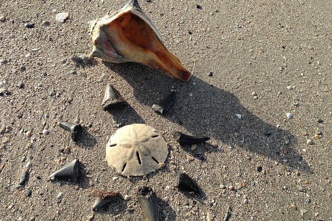 Shell Hunting Expedition