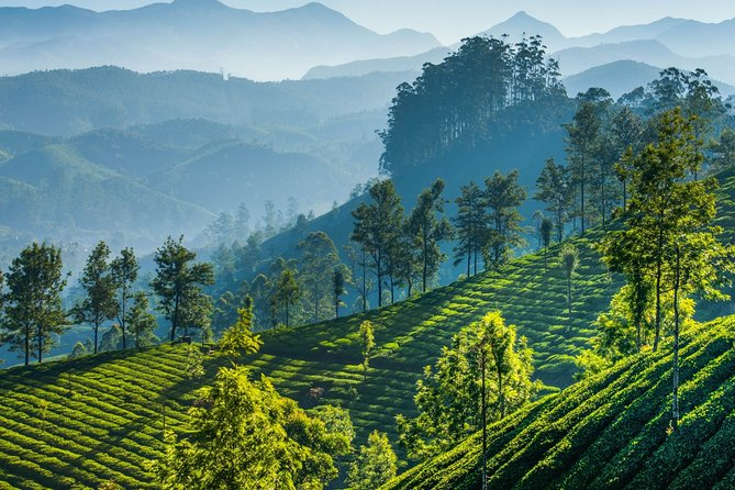 Day Trip to Munnar (Guided Sightseeing Tour by Car from Madurai)