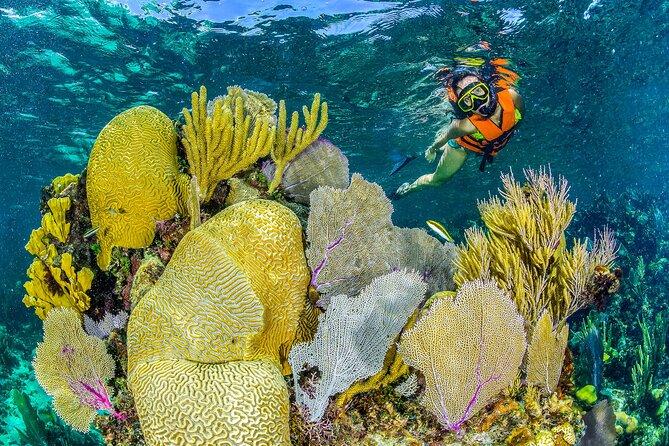 2-in-1 Outdoor Adventure Combo: ATV´s, Cenote Swim, Zip Lines and Reef Snorkel