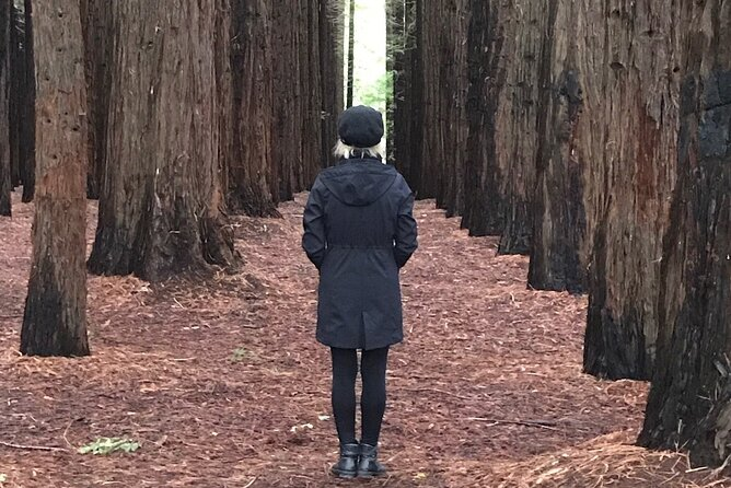 Private Aqueduct to California Redwoods Hiking Tour