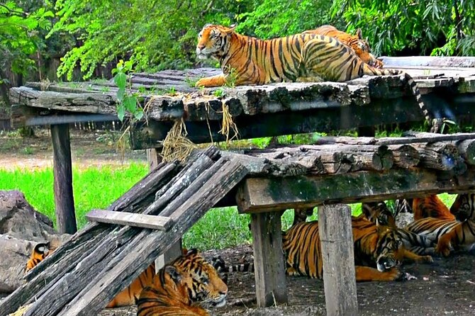 Safari World with Admission ticket ;Solo;Small groups;Family
