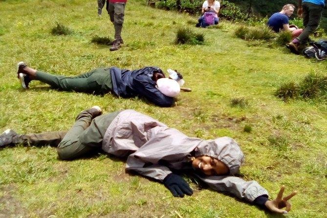Sometimes after treekinh mountain gorillas a rest is taken