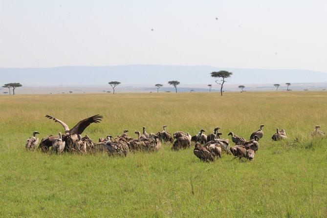 4-Day Safari to Ngorongoro crater and Serengeti