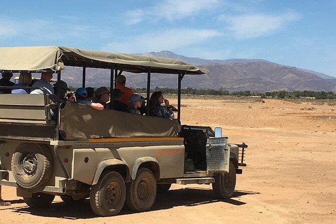 Big 5 Safari in Aquila Private Game Reserve from Cape Town