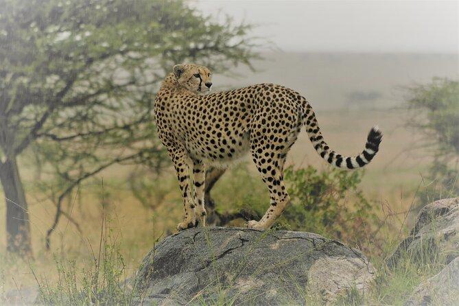 7 Days Manyara, Serengeti, Ngorongoro & Tarangire safari