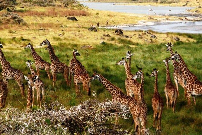 Tarangire, Lake Manyara & Ngorongoro Crater