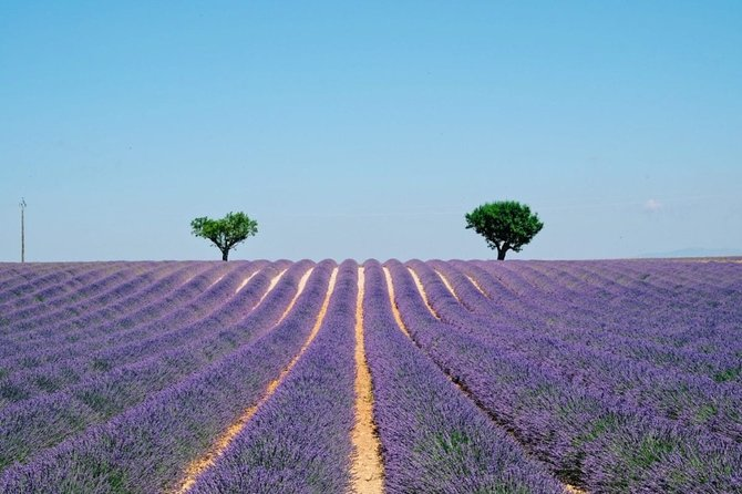 GUIDED TOUR: Lavender fields, the Gorges du Verdon