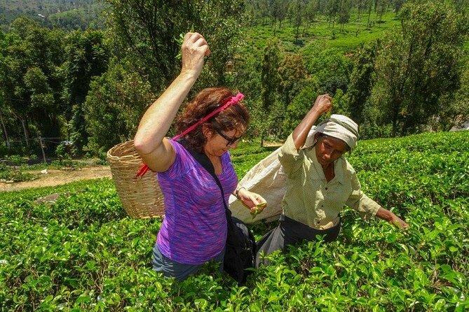 Tea Plantation Tour from Kandy