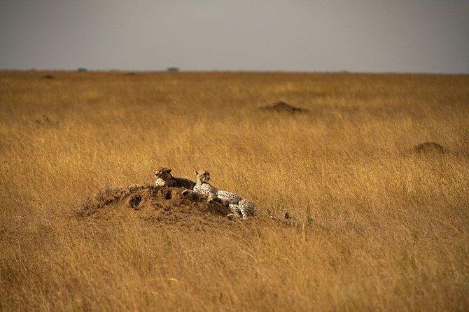 6-day itinerary safari in Tanzania