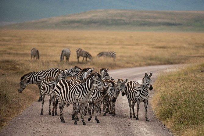 4 Days (3 Nights) Tarangire/Serengeti/Ngorongoro Crater
