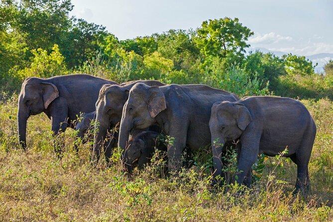 Amazing Sri Lanka - 6N/7D 04