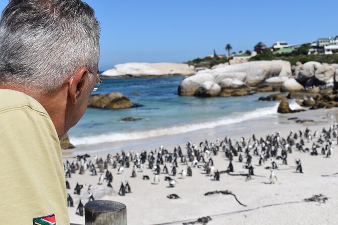 Penguin Colony at Boulders Beach with a Conservationist w/ Admission add-on
