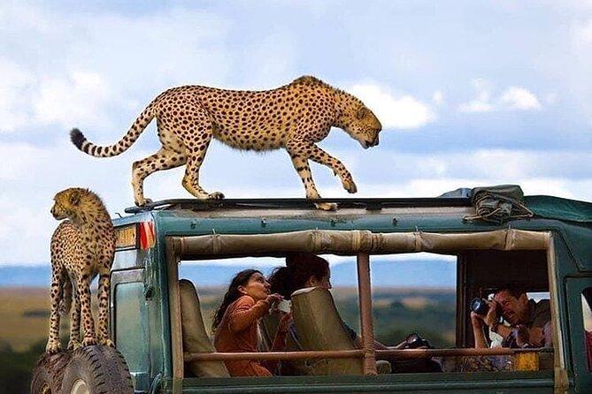7 Day Lodge Safari Tanzania
