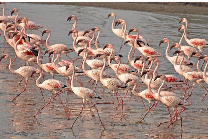 Lio piccolo: flamingos & birdwatching bike tour in the Venetian lagoon