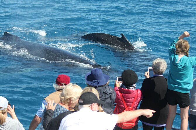 Half-Day Whale Watching in Urangan