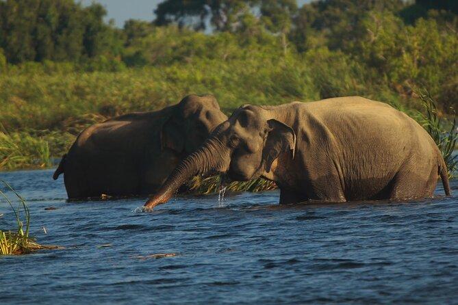 Gal Oya National Park Private Safari