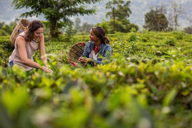 Ceylon Tea Tour (5 Days)
