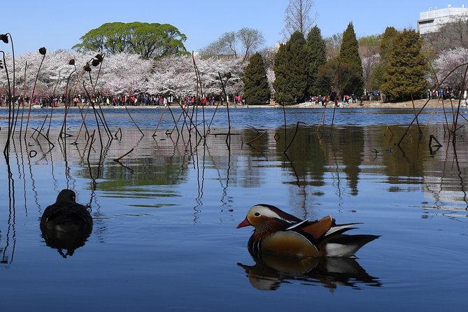Cherry Blossoms trip in Yuyuantan Park