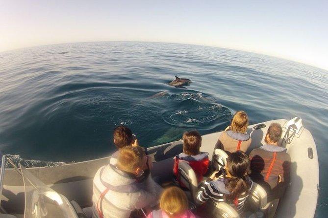 Algarve Dolphin Watching & Marine Life Eco Tour