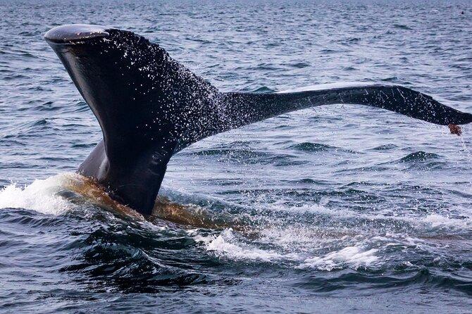 Kodiak Scenic Tours: Whale Watching Boat Excursion