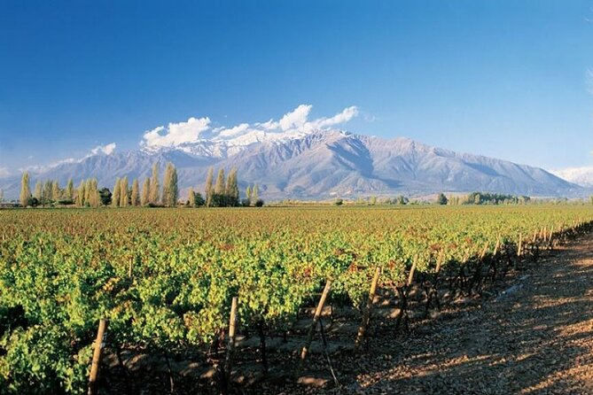 Santiago City Tour & Concha y Toro Vineyard