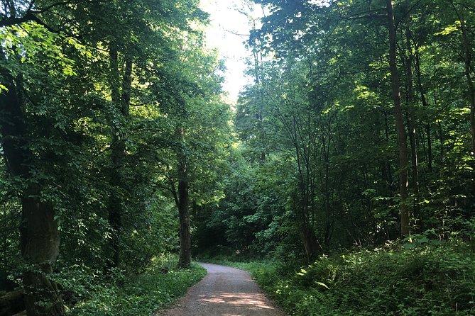 Forest Hike in Heidelberg