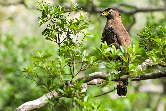 Wildlife Tour Covering Birds and Mammals (14 Days)