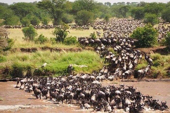 Wildebeest migration at Masai Mara