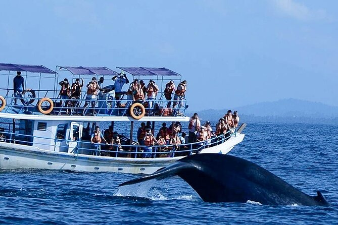 Wildlife Tour Covering Birds, Mammals and Whales (12 Days)