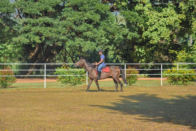 Horse Riding for Beginners from Negombo