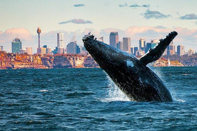 Whales of Sydney Safari