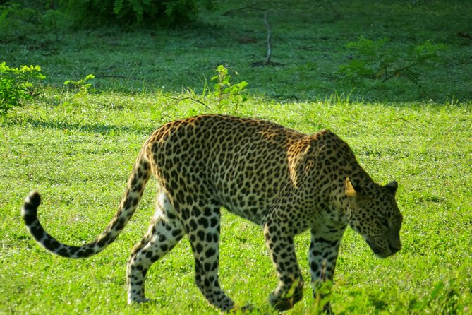 Yala National Park Safari from Talpe